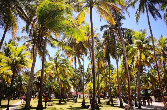 Johnny Cay Rolling San Andrés - Parque