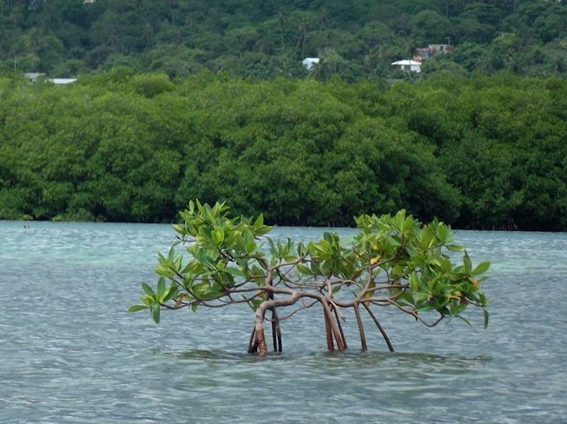 manglares Kayak Rolling San Andrés 16