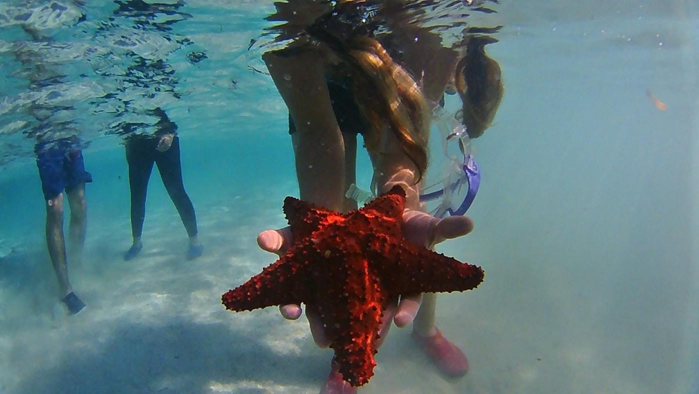 Siete Colores Rolling San Andrés - Estrella del Mar
