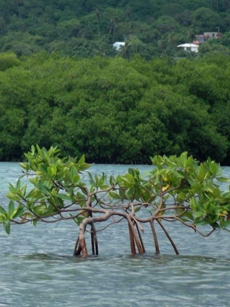 manglaresKayak_10