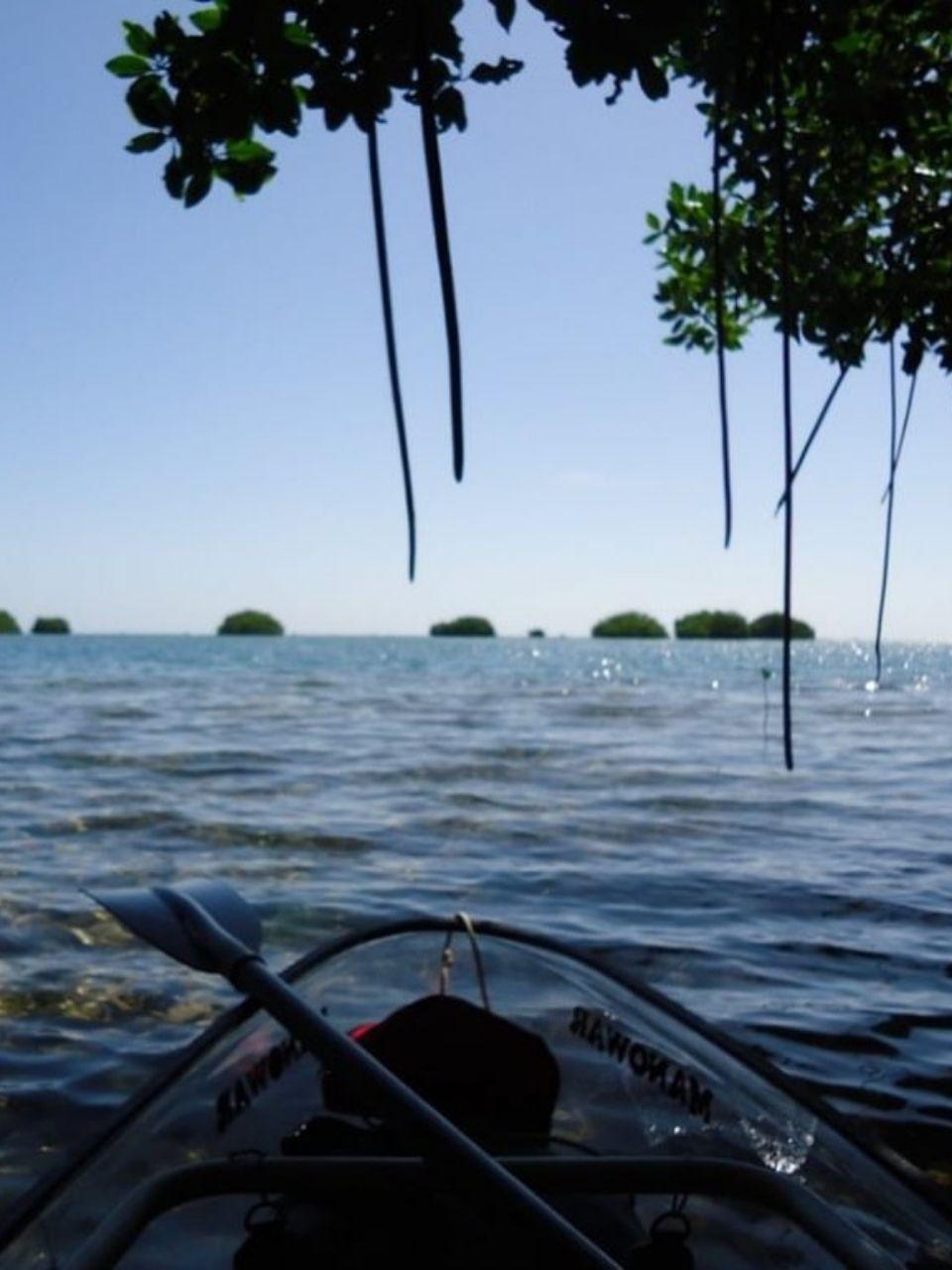 manglaresKayak_4